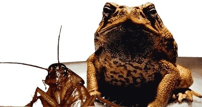 Cockroach and cane toad