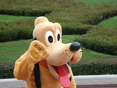 pluto, disney, disney world, disney land